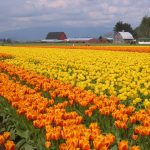thermography location in Skagit Valley